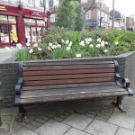 Guerrilla gardened daffodils on Chiswick High Road